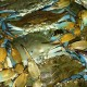 I Got Your Crabs - Outer Banks Events