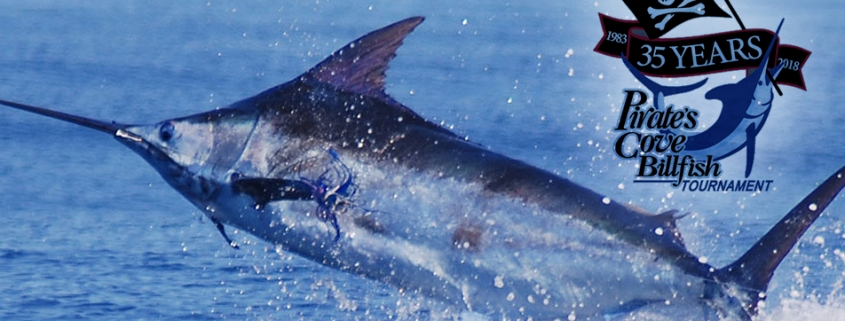Outer Banks events - Pirate's Cove Billfish Tournament
