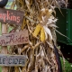 Outer Banks events - Halloween - pumpkin patch - Island Farm
