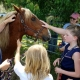 Outer Banks events - Corolla wild horses - meet a mustang - Sanctuary Vineyards