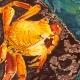 Outer Banks art shows - Dare County Arts Council Gallery - Art Exhibit - Susannah Sakal - Barbara Hanft