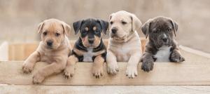 Outer Banks events - animal adoption - PetSmart