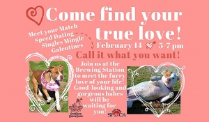 Outer Banks Valentine's Day events - SPCA pet adoption - Outer Banks Brewing Station